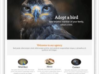 bird-1-250x250-320x240_c Web Builder