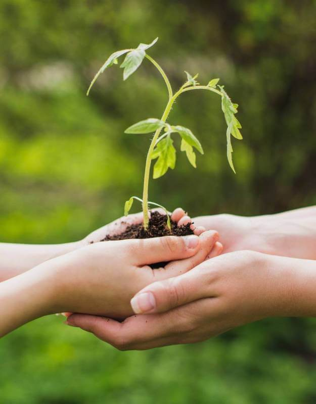 Green Web Hosting - carbon neutral